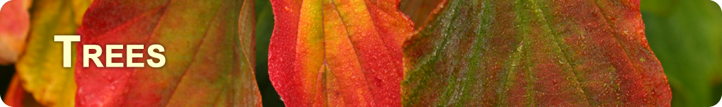 a closeup banner showing the rich red, green and orange of fall leaves